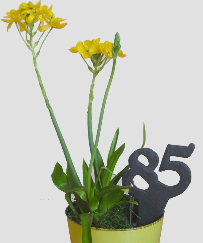 Jubiläumszahlen als Pflanzenstecker aus Schiefer